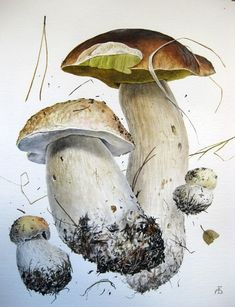 Mushrooms - watercolor