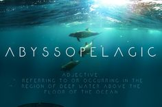 Abyssopelagic free typeface it's sans serif. Elegant and modern looks great for sophisticated headline moods. It's available for personal and commercial use. Credits for: Mark White Gothic Font Free, Gothic Fonts, Fonts For Mac, New Fonts, Script Fonts, Minimalist Font, Free Typeface, Best Free Fonts, Visual Learning
