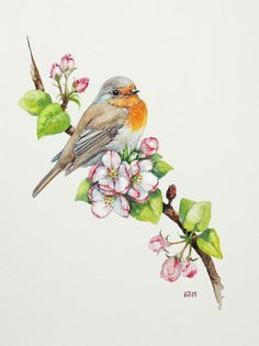 Robin. Original watercolour. Bird illustration.