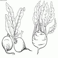 Beet And Kohlrabi Coloring Page Vegetables Coloring Sheets