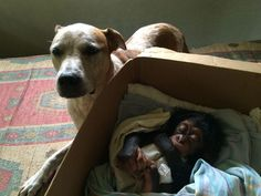 Rescued Dog Helps Baby Chimps Heal After Losing Their Family | Bored Panda
