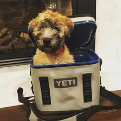 Paris the puppy is ready for weekend! Get your #yetiflip here @ruggedxl (puppy not included) Click the link in the bio for more yeti products. Everything in stock ready to ship! We also offer laser cut logos on all our stainless products. Give us a call with any questions! @yeti_pups @yeti #yetilife #getruggedxl #yetitumbler #yetirambler #yetihopper #yeticoolers #ruggedxl #shoplocal #everythinginstock #yetipups #paristhepuppy #wheatenterrier #yetirambler #summeriscoming #coolers #hunting…