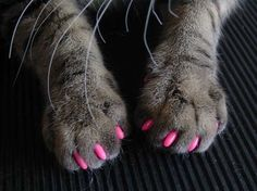 Soft claws nail caps are an 'attractive' and humane alternative to declawing your cat. Developed by a veterinarian, Soft Claws are vinyl nail caps that glue on to your cat's claws. The nail caps cover the claw tips so no damage occurs when your cat scratches. One package contains enough nail caps for 4 applications on Kitty's front paws. Each application lasts approximately 4-6 weeks. Soft Claws come in Kitten, Small, Medium, and Large sizes, and in Natural, Purple, Pink, Blue, and Red…
