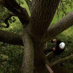 Vue d'en haut #treeclimbing #climbing #tree #grimpedarbre #landes #paysbasque #grimperdanslesarbres #discovernature #exploreoutdoors