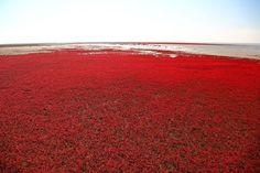 panjin-red-beach-6