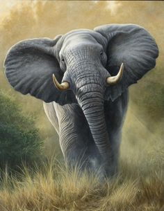 Elephant by Dr Jeremy Paul, wildlife Artist Photo Elephant, Elephant Love, Elephant Art, African Elephant, Wildlife Paintings, Wildlife Art, Animal Paintings, Animal Drawings, Elephant Drawings