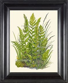 FERN PRINT Lindman 8X10 Botanical Art Print 5 Antique Beautiful Green Ferns Summer Forest Nature Home Decoration