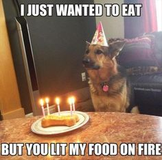 Dogs somehow don't appreciate Birthday festivities the way we humans do.