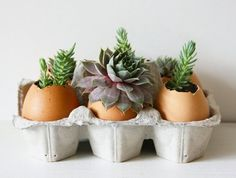 How To Plant Succulents in Eggshells — Projects from The Kitchn | The Kitchn