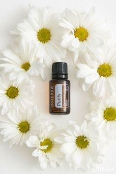 Purify is a doTERRA essential oil blend composed of select essential oils known for their cleansing, purifying, and protecting properties. Doterra Blends, Doterra Essential Oils, Essential Oil Blends, Coconut Oil For Face, Coconut Oil Uses, Essential Oils For Anxiety, Pure Oils, Perfume, Essential Oils