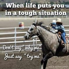 Send luxury gift boxes to the horse lover in your life. Unique gift ideas for any equestrian. Rodeo Quotes, Equine Quotes, Cowboy Quotes, Cowgirl Quote, Equestrian Quotes, Horse Sayings, Cute Horse Quotes, Hunting Quotes, Funny Horse Memes