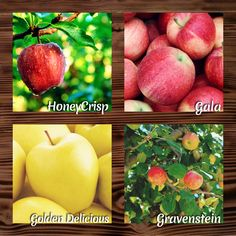 Apples Harvested & Available Daily!