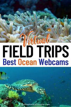 Monterey Bay Aquarium, Professor, Ocean Unit, Virtual Field Trips, Kelp Forest, Thing 1, Georgia Aquarium, Home Schooling, Whale Sharks
