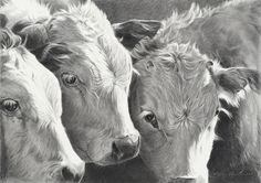"""Weaning at the Babbitt by Mary Ross Buchholz Graphite & Charcoal ~ 11"""" x 16"""""""