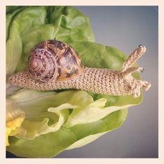 Crochet Snail Inside Real Shell by @amigurama - love the beady eye! #crochet #amigurumi
