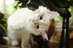 kitty faucet