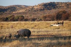 """Also """"Vermundo Reisen"""" got the chance to see our new member of the rhino family :-) What a great shot! Take your chance and book our game drives ☀ http://gocheganas.com"""