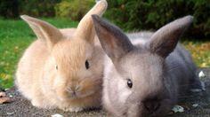Come capire quando è ora di far sterilizzare il proprio coniglio
