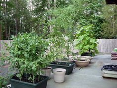 vegetable container gardening garden guides rock walls and fences pinterest garden guide container gardening and gardens