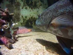 Animal behaviour: Inside the cunning, caring and greedy minds of fish : Nature News & Comment
