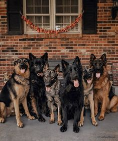 A woman revealed it took DAYS to get her 17 cats and dogs to pose together for a. - A woman revealed it took DAYS to get her 17 cats and dogs to pose together for a picture - I Love Dogs, Cute Dogs, White Shepherd, Malinois, German Shepherd Puppies, German Shepherds, Schaefer, Shelter Dogs, Large Dogs