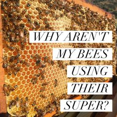 The reasons for why your bees are not filling out their super are numerous and nuanced. Sometimes the answer lies in the timing and sometimes you just have picky bees. Read on to find out all the p…