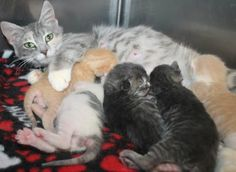 Garden and her babies: Major pledges offered to save this sweet family. In a high rate kill shelter and need out.
