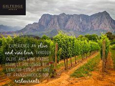 Cape Winelands   Olive & Vine Tour