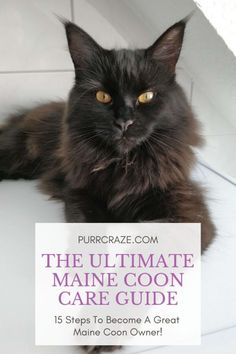 How To Care For Maine Coon Cats