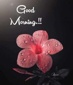Good Morning Flowers Quotes, Good Morning Meme, Good Morning Life Quotes, Morning Wishes Quotes, Morning Inspirational Quotes, Good Morning Picture, Good Morning Good Night, Morning Pictures, Good Morning Greeting Cards