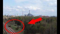 La Cernobîl au apărut mutanți