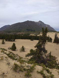 Carcross Desert Yukon Alaska, Canadian Rockies, River, Outdoor, Outdoors, Outdoor Games, Outdoor Living, Rivers