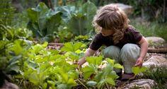 Quelques pistes pour cultiver son jardin