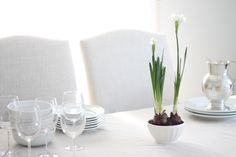 paperwhites potted in bowls for fresh & relaxed winter decor