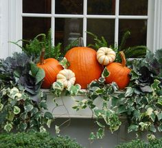 What's outside your window? We're welcoming #fall #windowbox #pumpkins