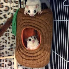 Sugar Glider by Hachi Family.I want to make one for Zoey and Decklyn. Sugar Glider Care, Sugar Glider Toys, Sugar Gliders, Baby Skunks, Baby Bunnies, Guinea Pig Toys, Guinea Pigs, Baby Animals, Cute Animals