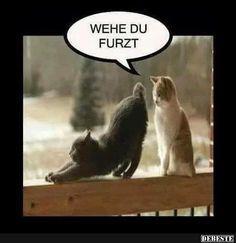 Wehe du furzt.. | DEBESTE.de, Lustige Bilder, Sprüche, Witze und Videos