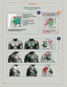 Anatomy for Sculptors, Understanding the Human Figure: Uldis Zarins with Sandis Kondrats, Monika Hanley, Sabina Grams: 9780990341109: Amazon.com: Books