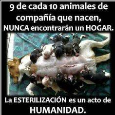 Cat&Dog El Salvador (@CatDogSV) | Twitter