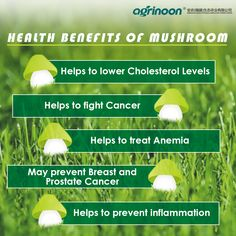 Health benefits of Mushrooms.🍄 Mushrooms have the power to protect your health from any kind of risks! Health Benefits Of Mushrooms, Mushroom Benefits, Agriculture Companies, Protect Your Heart, Prostate Cancer, Cholesterol Levels, Stuffed Mushrooms, Breast, Stuff Mushrooms