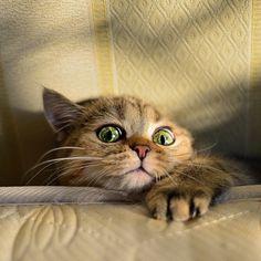 """ilovedotcat: """"よんだっ?? """""""