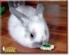 aww fluffy bunny