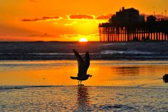 Seagull takes off at sunset in Oceanside.