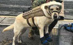 Frida y el trabajo de los perros de rescate en terremotos