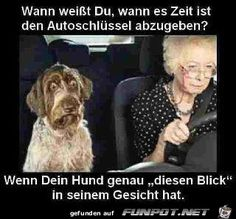 funpot: I hope the gut.jpg of Kruemel - Sieh's mal anders :D - Funny Tierischer Humor, Man Humor, Funny Dogs, Funny Animals, Funny Memes, Really Funny, Funny Cute, Sarcastic Jokes, Super Cute Animals