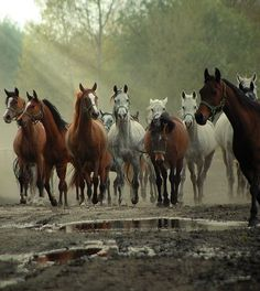 Are there any animals more beautiful than horses? I don't think so.