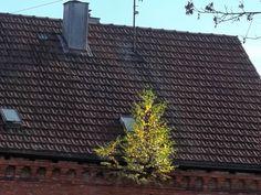 Roof-Tree...