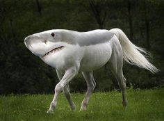Image result for freaky horse