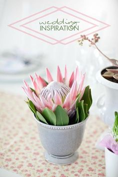Containers for Displaying Flowers protea - very cute.protea - very cute.