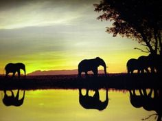 Go on an African safari #Travel #Bucketlist